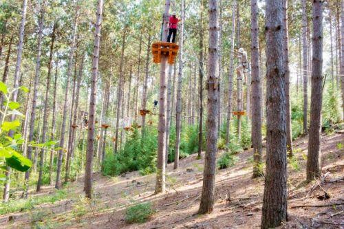 Bethany.Ontario.Blog.Tree.TopTrekking
