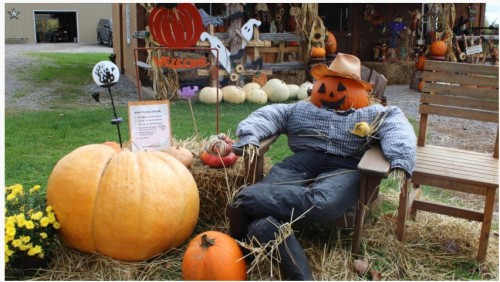 bethany-ontario-blog-pumpkin