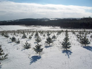 bethany-ontario-blog-christmas-trees-2