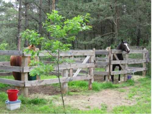 Bethany.Ontario.Blog.Sandaraska.Park.2