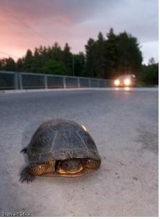 Bethany.Ontario.Blog.Turtles.2