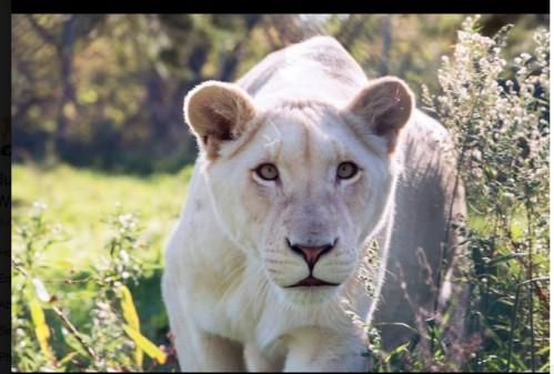 Bethany.Ontario.Blog.JungleCatWorld.3